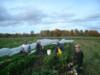 La Terre Ferme Récolte de céleris raves-10